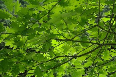 leaves-195672_1920