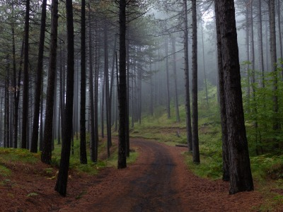 forest-954100_1920