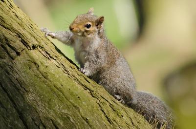 squirrel-165201_1280