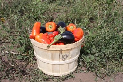 harvest-944769_1920