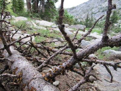 forest-dieback-337828_1920
