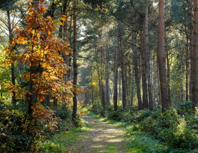 forest-1342448_1280